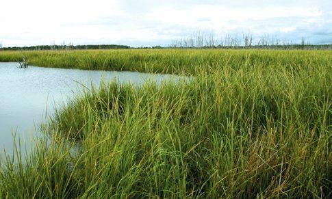 Ekolojik Restorasyon Nedir?